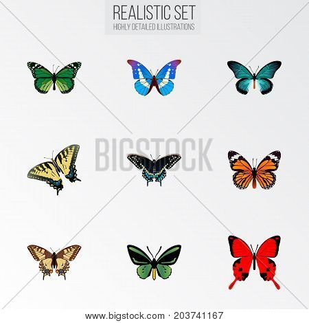 Realistic Pipevine, Tiger Swallowtail, Birdwing And Other Vector Elements