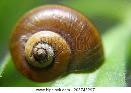 Macro photography of a snail shell over a leaf