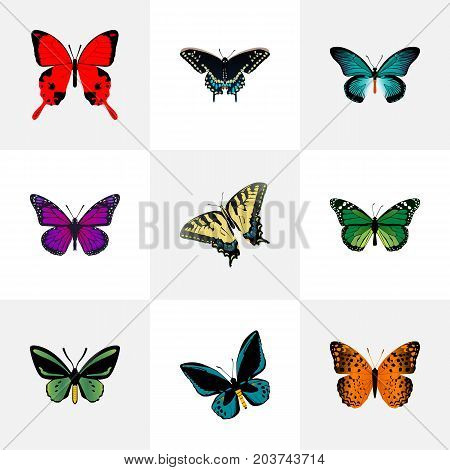 Realistic Checkerspot, Danaus Plexippus, Demophoon And Other Vector Elements