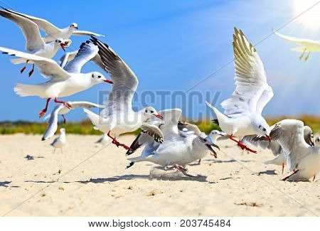 flock of sea gulls flying in the air against a background of nature in the rays of a bright sun summer day