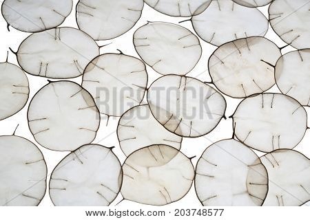 Unusual leaves with a tip in backlight. Texture of leaves isolated on white background. Eco style natural materials