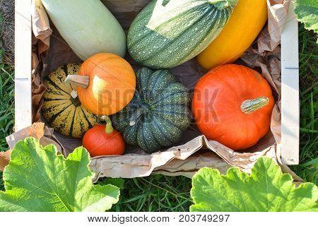 Box With Fresh Pumpkins And Squash