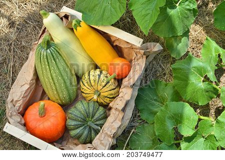 Box With Fresh Pumpkins And Squashes