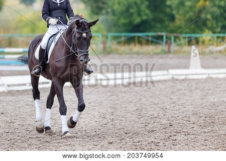 Raven horse with rider girl walking on dressage competition. Image with copy space