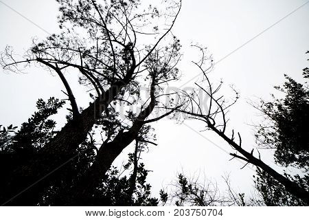 From below shot of black silhouettes of trees against gloomy and cloudy sky.