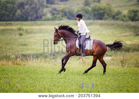Young rider woman galloping on bay horse on grassy meadow. Rider girl in white shirt and helmet riding dark bay stallion