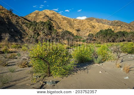 Yellow Flowering Bushes In Riverbed