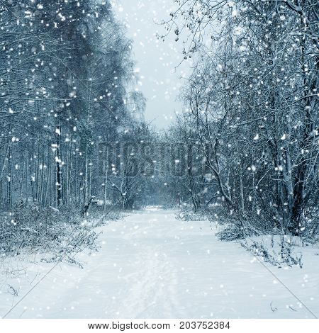 Winter nature - trees, road  and snowstorm in forest