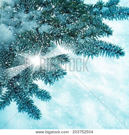 Winter Nature, Trees In Snow Frost