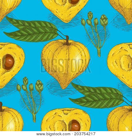 Seamless Pattern with Ripe Yellow Canistel or Eggfruit in Cross Section and Whole with Seed on a Blue Background