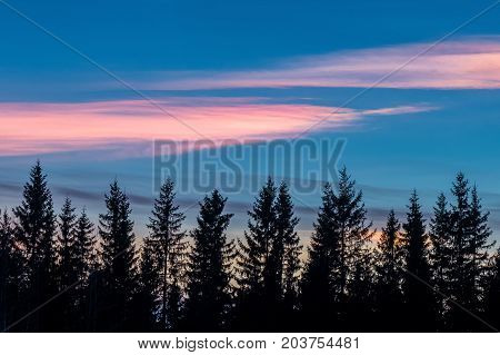 Colorful nacreous clouds and tree silhouettes landscape
