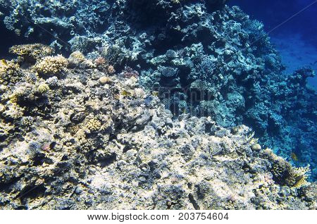 Coral reef on the edge of the depth