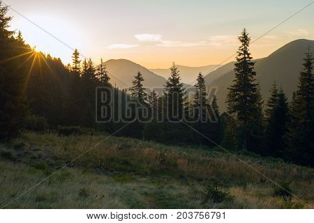 Sun Sits Down Behind Huge Spruce Trees In An Alpine Meadow