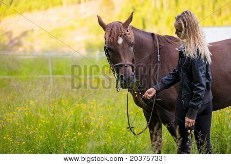 Young woman feeding her adult arabian horse standing in a field. Relationship between human and animal.