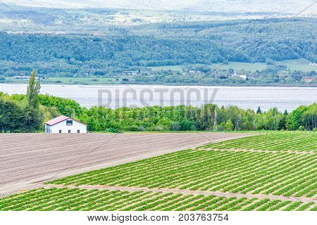Aerial Cityscape Landscape View Of Farmland In Ile D'orleans, Quebec, Canada, Plowed Field, Furrows,