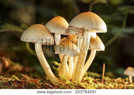 Mushroom in the forest flor in september