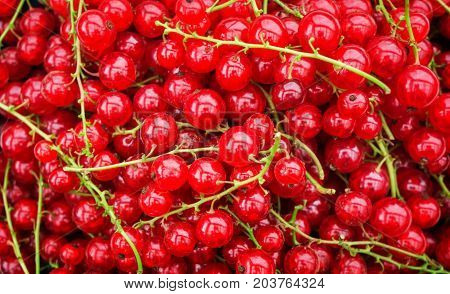 are ggerntete fresh red currants in a bowl