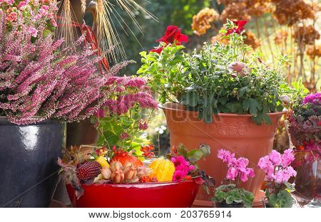 Heather and autumn decoration on the terrace
