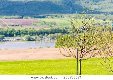Ile D'orleans Landscape With Green Blossoming Young Apple Trees And Field In Summer With View Of Sai
