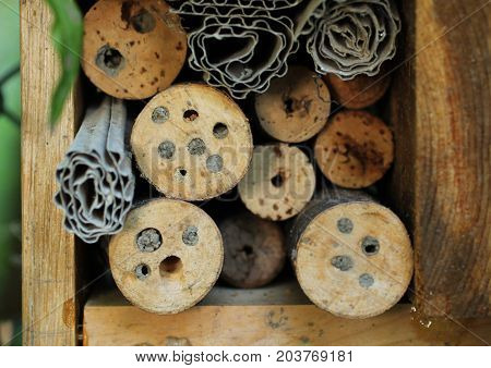 detail of insect hotel with holes in the wood sealed by solitary bees