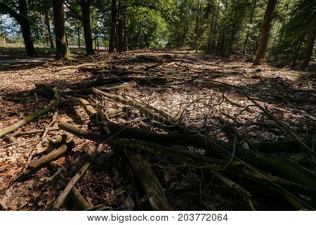 Game of light and shadows on the ground that play with the fallen branches of trees on the ground in the woods.