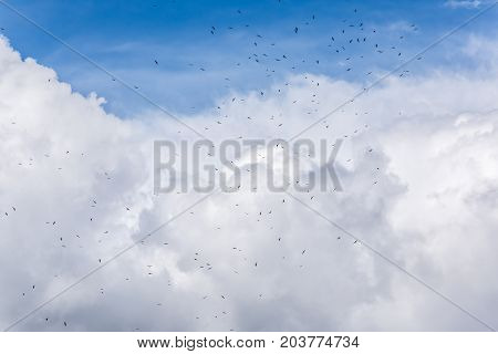Many White Seagulls Birds Flying High In Flock Group Against Isolated Stormy Gray Blue Large Big Hug