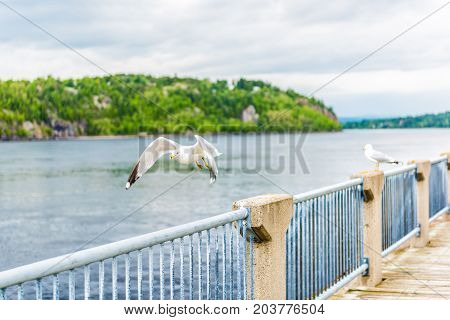 Sidewalk Terrace Boardwalk In Saguenay Downtown City Park In Quebec During Summer With Fjord River,