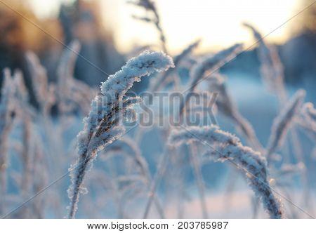Winter scene .Frozenned flower, snowdrift Winter  travel