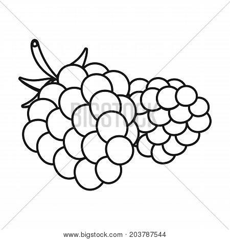 Raspberry, sweet fruit.Fruit single icon in outline style vector symbol stock illustration .