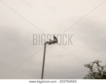 A Pigeon Sitting On Top Of A Lamp Post Outside Overcast