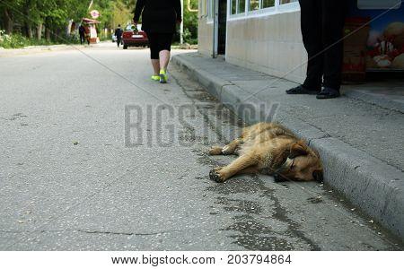 A dog of a shepherd and a pooch asleep on the asphalt
