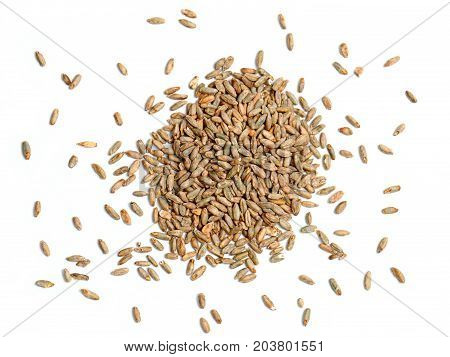 Malted Rye Grain on a White Background
