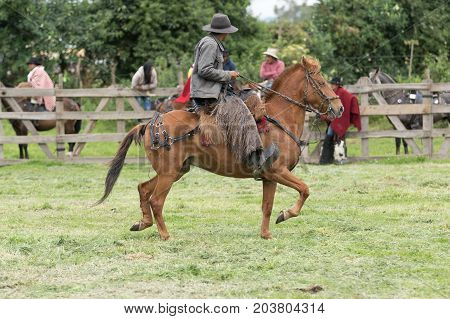 June 3 2017 Machachi Ecuador: cowboy from the Andes called 'chagra' on horseback wearing traditional chaps
