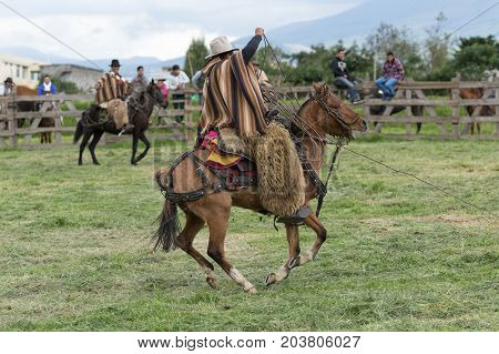 June 3 2017 Machachi Ecuador: cowboy in traditional poncho and chaps on horseback handling the lasso