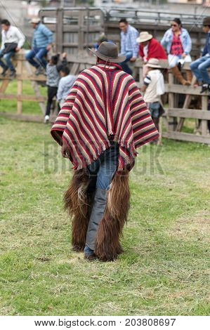 June 3 2017 Machachi Ecuador: cowboy wearing furry chaps and striped poncho walking outdoors