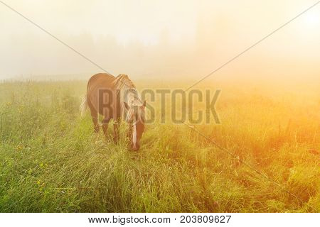 Beautiful horse in the mist at dawn in the mountains.