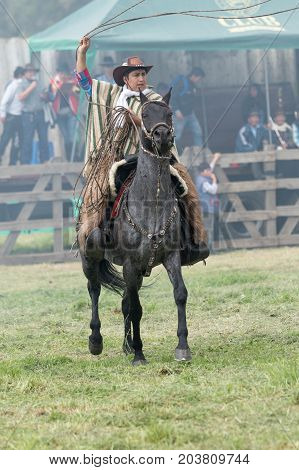 June 3 2017 Machachi Ecuador: Andean cowboy on horseback wearing chaps and poncho handling a lasso