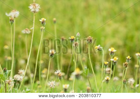 Grass flower beside the way in the morning on the sunrise.