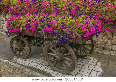Rustic cart with petunia flowers in the center of Livigno, Lombardy, Italy