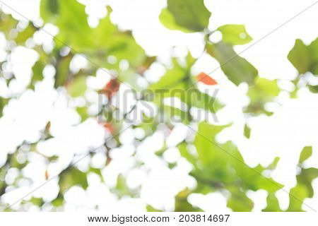 Blury bokeh green leaf on white sky.