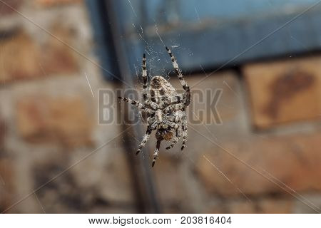 A spider on its web shot close-up.