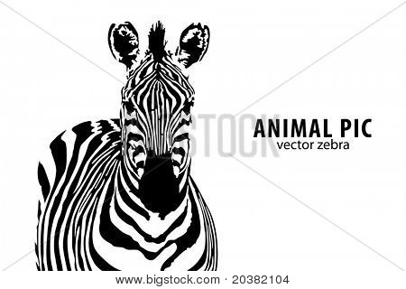 vector zebra with place for text