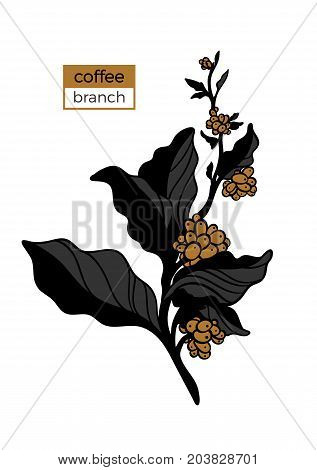 Template of color branch of coffee tree with leaves and natural coffee beans. Organic product. Silhouette art line. Botanical illustration. Vector isolated on white background eps.10
