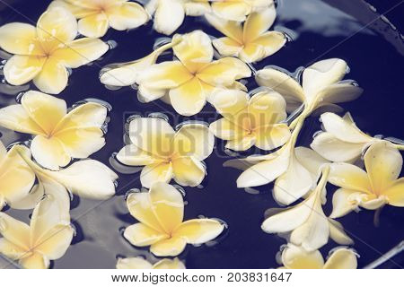 Frangipani spa flowers background in the water