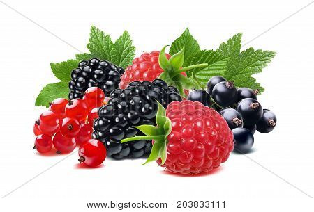 Black raspberry and red currant berries mix with leaves isolated on white background for tea package design