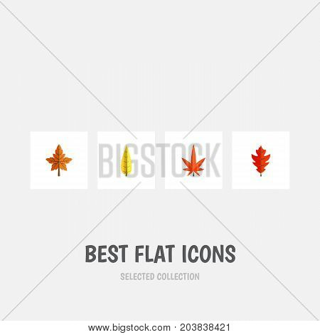 Flat Icon Leaves Set Of Maple, Aspen, Alder And Other Vector Objects