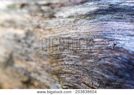 convex background and abstract indistinct texture of an old tree with cracks