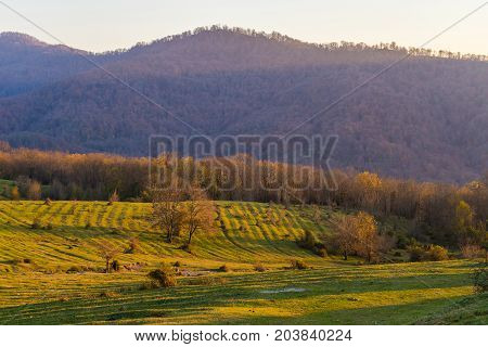 Mountain forest landscape. The mountains are sheltered by the forest, a sunny day