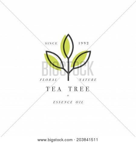 Vector set of packaging design template and emblem - beauty and cosmetics oil - tea tree. Logos in trendy linear style