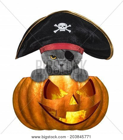 halloween pumpkin with cute cat in pirate costume - isolated on white background